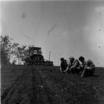 disking, corn sowing