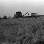 wheat combine harvester