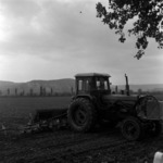 agriculture, corn sowing