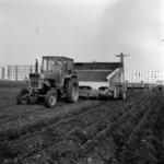 I.A.S.-ari Mihai Viteazu, Poiana, potato planting, greenhouses Câmpia Turzii