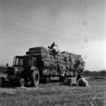 harvest, straw bales transportation