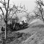 Spraying fruit-trees Dealu Morii