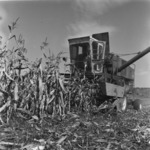 mechanized corn harvest