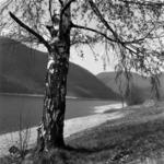 landscape Tarniţa