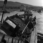 Transporting sugar-beet