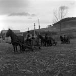 manure transportation Apahida