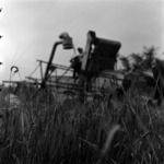 agriculture, harvest, wattle, combine harvesters