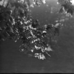 leaves autumn, Grigorescu with long-focus lens