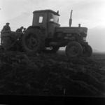 agriculture, potato seeding