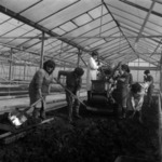 Preparing seedlings