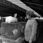 Exhibition, rabbits