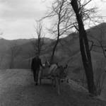 Valea Ierii