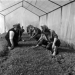 vegetables, sowing