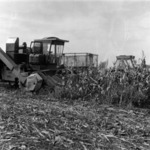 mechanizes corn harvesting