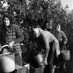Maia, apple picking and trasportation