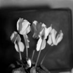 Symbol flowers