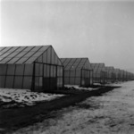 greenhouses Someşeni