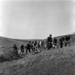 Apahida, cleaning the pasturage