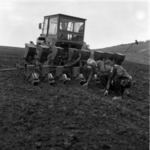 haricot sowing