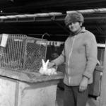 Exhibition, rabbits