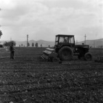 sowing and picking corn
