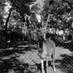 Zoo Turda