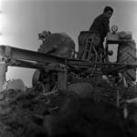 agriculture 1971 corn