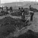 patriotic work III - planting clover
