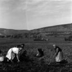 plowing in summer