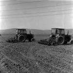 vegetables, sowing