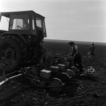 agriculture, corn sowing, Recea