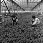 greenhouses, Dej