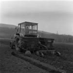 potato and carrot seeding