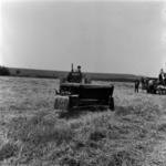 agriculture, harvest, wattle, combine harvesters