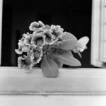 Floarea Kati, Hoia, Şorban