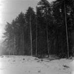 landscape in the Meseş, snowdrop