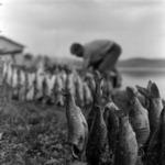 Ţaga, boat, roasted fish