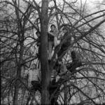 fans in the tree