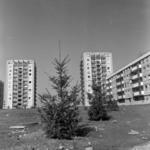 Gheorgheni