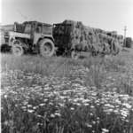 collected hay
