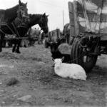 Gilău market 1991